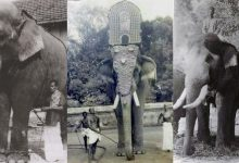 Photo of ഗജരാജ കുലപതി  ഗജഗന്ധര്വന്  ഗുരുവായൂര് കേശവൻ